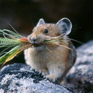 Какой запах отпугивает мышей в доме (квартире)