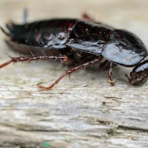Откуда в квартире берутся большие черные тараканы и как от них избавиться