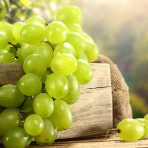 Как хранить черенки винограда до зимы или весны в домашних условиях