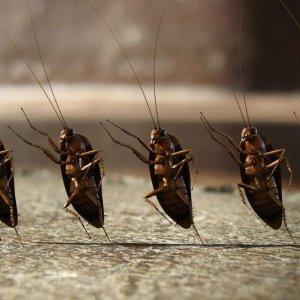 Как избавиться от тараканов в квартире навсегда. Средство от тараканов