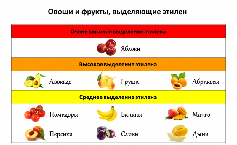 Как правильно хранить спелые, бурые и зеленые помидоры в домашних условиях, чтобы они максимально долго оставались свежими: необходимые условия, популярные способы